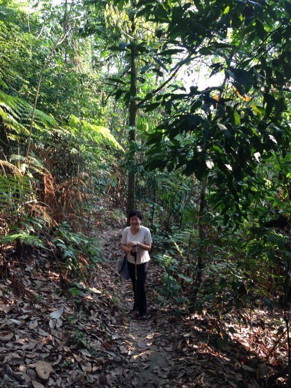 Sharoninforest